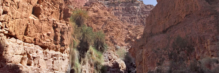 Wadi Himara Palm Trees and Waterfall Trail - A View of the Wadi - Hiking in Jordan.