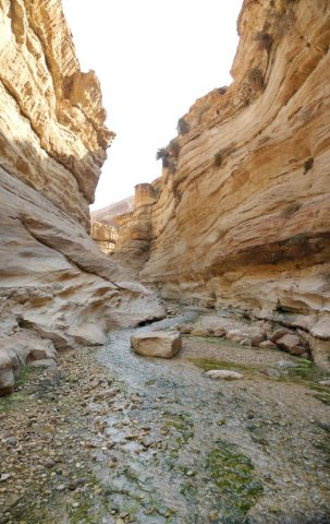 15 Wadi Assal - The Stream In the Wadi Runs through the Siq