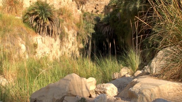 10 Wadi Weida - Palm Trees and Other Vegetation in the Wadi