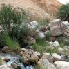 18 Wadi Weida - A View of the Wadi