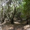 07 Wadi Zubia Forest Walk - You Will Walk through Dense Forest Vegetation for A While
