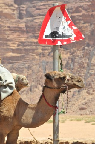 05 Nabatean Temple Trail - Be Aware of Speed Bumps In Wadi Rum Village