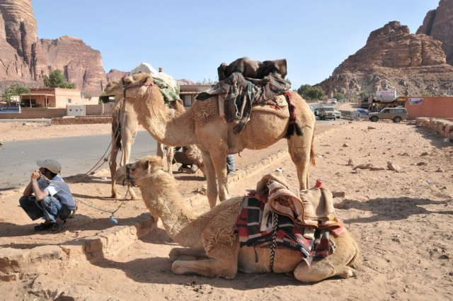 10 Nabatean Temple Trail - More Camels in Wadi Rum Village