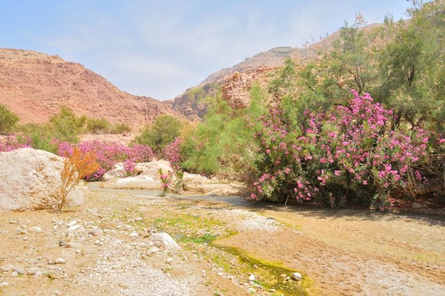 18 Wadi Al Karak Waterfalls  - A View of the Wadi